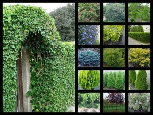 Каталог декоративных кустарников