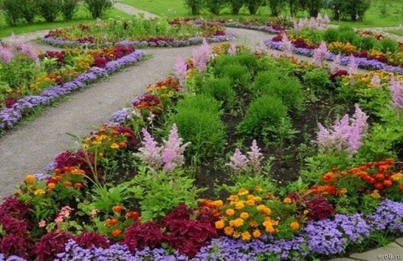 Низкорослые декоративные кустарники - бордюр