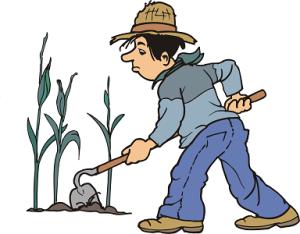 Выращивание декоративных кустарников