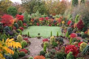 Композиция декоративных кустарников