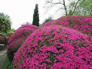 Многолетние декоративные кустарники — лучшее украшение сада