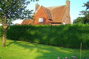 Живая изгородь как способ огородить и украсить участок