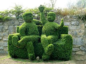 Самшит вечнозелёный: посадка и уход за зелёными постройками