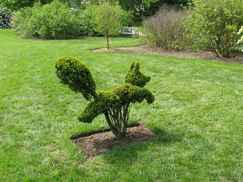 Самшит вечнозелёный - скульптуры
